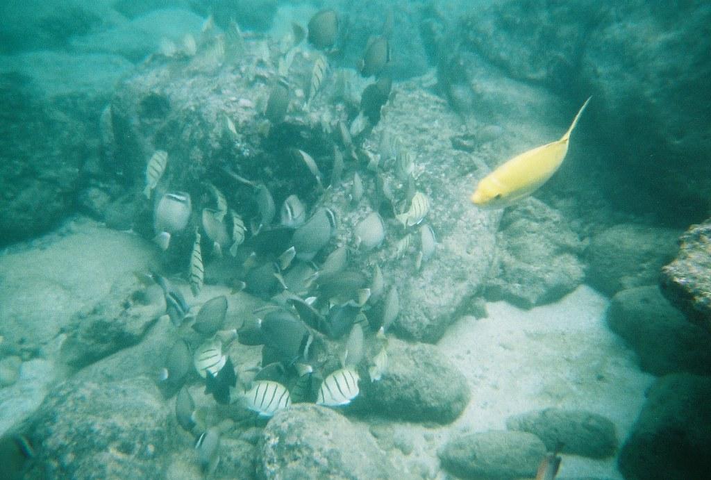 Shark's Cove On Oahu