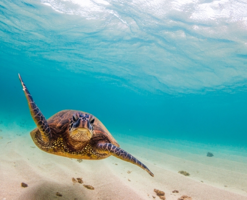 5 Exciting Ways To Cover Oahu In Budget