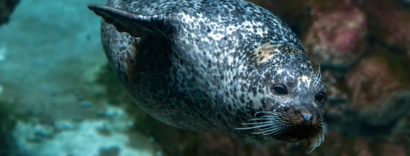 Amazing Facts Everyone Needs To Know About Hawaiian Monk Seal