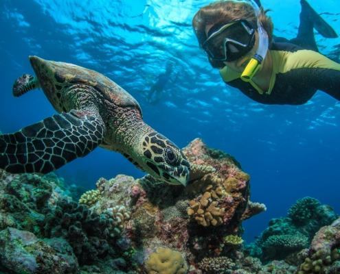 Fascinating Facts about Hawaiian Green Sea Turtles