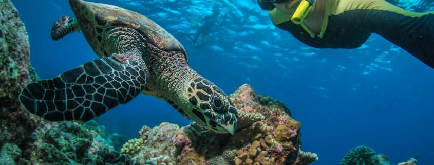 Fascinating Facts about Hawaiian Green Sea Turtles