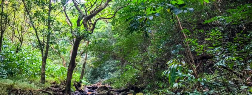 Hiking the KAAU Crater Tail on Oahu Hawaii